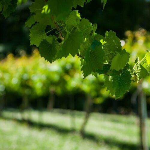 Route des vins -Provence